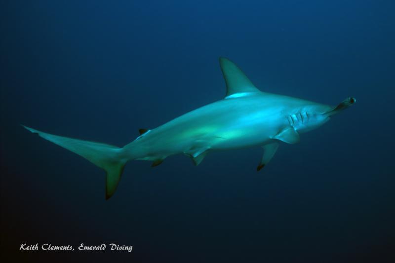Emerald diving dive reports for Shark tank fairy door