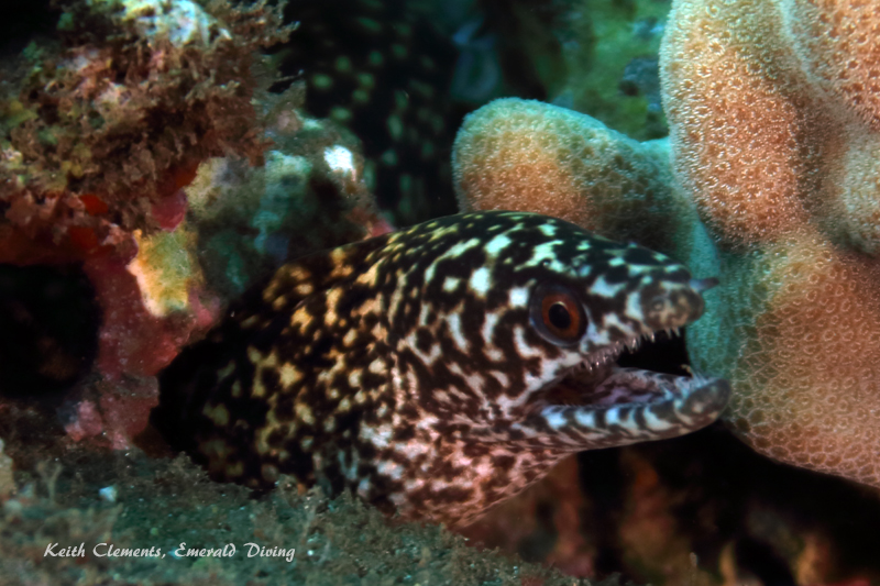 Moray_MalaMaui16_5383