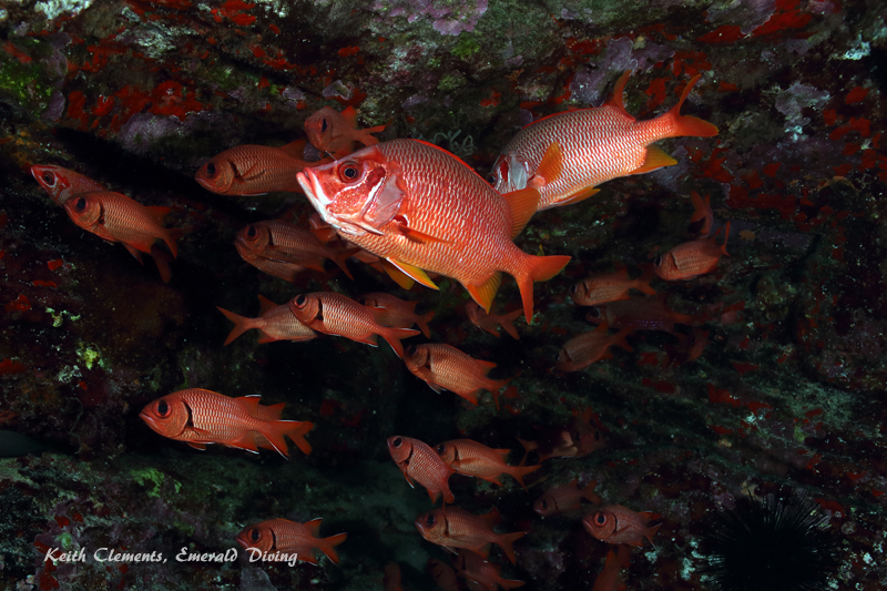 Squirrelfish_Longjaw_BackwallMaui16_5102