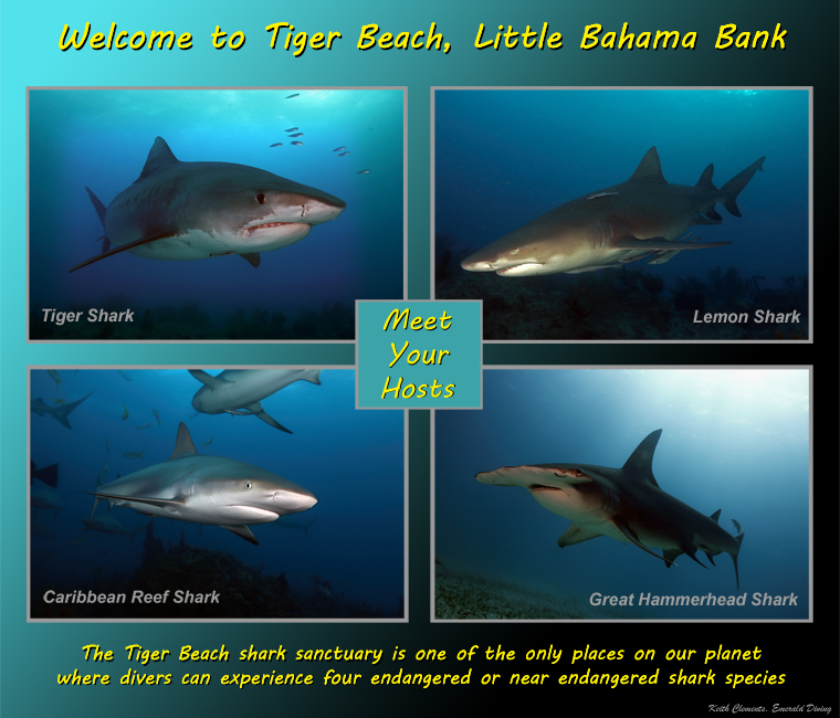 Welcome_ to_Tiger_Beach
